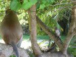 Brutal monkeys steeling from tourists